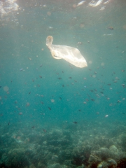 120427_moalboal_waste