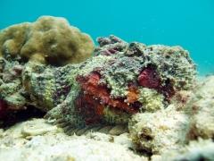 120611_pulauweh_stonefish
