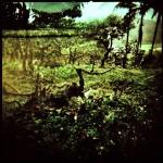 Madekirii jungle