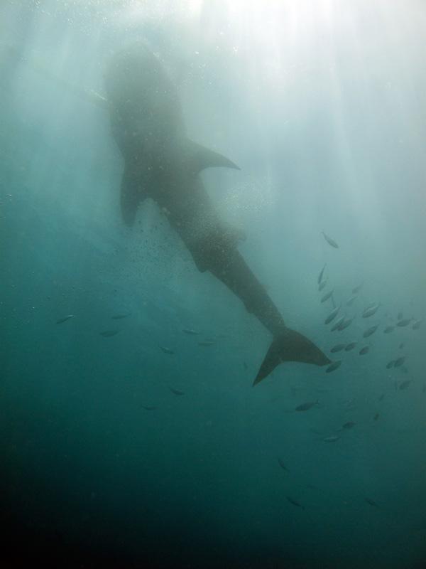 Philippines – Dive locations